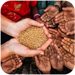 ¿Hay solución para la crisis alimentaria que estamos viviendo?
